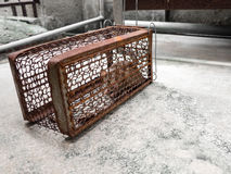 Die Ratte war in einem Käfig, der eine Ratte fängt die Ratte hat Ansteckung die Krankheit zu den Menschen wie Leptospirose, Pest Lizenzfreie Stockfotografie