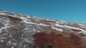 Die raue Beschaffenheit des Nationalparks Saylyugemsk y, Altai Vogelperspektive 4K Der Argali die Bergschafe, Schafe stock video footage