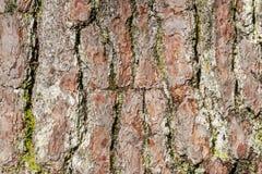 Die raue und gesprenkelte Baumrinde stockfotos