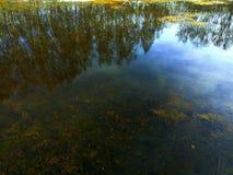 Die Reflexion des Waldes im Wasser von einem Waldsee, an deren Unterseite sichtbares überschwemmtes Gras und Blätter ist- lizenzfreie stockfotografie