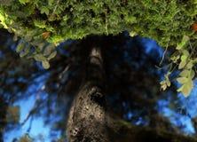 Die Reflexion eines Baums im blauen Wasser von einem See Stockfotografie