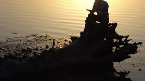 Die Reflexion eines jungen Mannes, der ein Buch an einem See liest stock footage