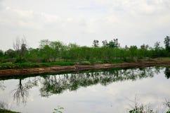 Die Reflexion und Effekte, die vom Wasser umweltsmäßig sind, verseuchten Esprit Stockfotos
