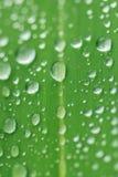Die Regentropfen auf einem grünen Blatt Stockfotografie