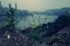 Die Region von wilden Blumen Stockfotografie