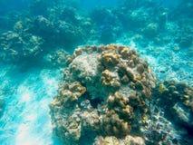Die reichlichen von flachen Korallenriffen im südlichen von Thailand, stockfotografie