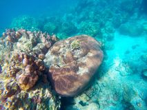 Die reichlichen von flachen Korallenriffen im südlichen von Thailand, stockbild