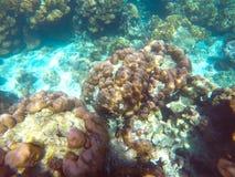 Die reichlichen von flachen Korallenriffen im südlichen von Thailand, stockbilder