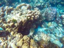 Die reichlichen von flachen Korallenriffen im südlichen von Thailand, lizenzfreie stockbilder