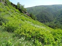 die Reise nach Russland sibirien krasnoyarsk Sommer lizenzfreie stockfotos