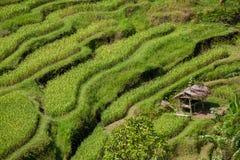 die Reisfelder von Bali Lizenzfreies Stockfoto
