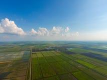 Die Reisfelder werden mit Wasser überschwemmt Überschwemmte Reispaddys Landwirtschaftliche Methoden des Anbauens des Reises auf d Stockfotos