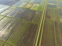 Die Reisfelder werden mit Wasser überschwemmt Überschwemmte Reispaddys Landwirtschaftliche Methoden des Anbauens des Reises auf d Stockbild