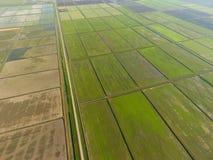 Die Reisfelder werden mit Wasser überschwemmt Überschwemmte Reispaddys Landwirtschaftliche Methoden des Anbauens des Reises auf d Lizenzfreie Stockfotografie