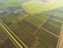 Die Reisfelder werden mit Wasser überschwemmt Überschwemmte Reispaddys Landwirtschaftliche Methoden des Anbauens des Reises auf d Stockbilder