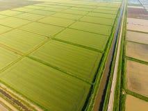 Die Reisfelder werden mit Wasser überschwemmt Überschwemmte Reispaddys Landwirtschaftliche Methoden des Anbauens des Reises auf d Stockfotografie