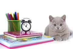 Die reizend grauen flaumigen britischen Kätzchenlügen, nahe der Uhr, Bücher, Bleistifte Willkommen zur Schule lizenzfreies stockbild