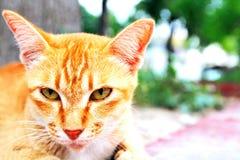 Die reizende nette Katze, die etwas und Weiche schaut, verwischte Hintergrund Lizenzfreies Stockfoto