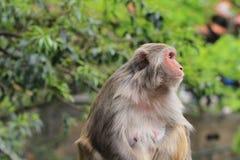 Die reizenden Affen Lizenzfreies Stockfoto