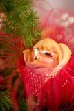 Die Ringe auf den Blumen, in einem Kasten, auf einem weißen Gewebe auf Spielwaren, Farben, Heiratsdetails, Eheringe Lizenzfreie Stockbilder