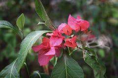 Die rosa Blume im Park Lizenzfreie Stockbilder