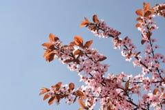 Die rosa Blumenblätter lizenzfreie stockfotos