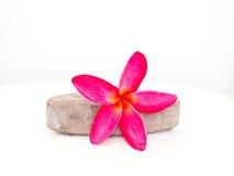 Die rosa Frangipaniblume, die auf den Stein gesetzt wird, scheuern Haut Lizenzfreie Stockbilder