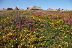 Die rosa Granit-Küste, Taubenschlag de Granit stieg, in Bretagne lizenzfreies stockfoto