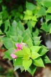 Die rosa Papierblume und die Blätter Stockfotografie