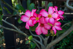 Die rosafarbene Blume Lizenzfreie Stockfotos