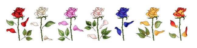Die Rosen übergeben das Zeichnen und färben Ein blühender Rosebudssatz Auch im corel abgehobenen Betrag vektor abbildung