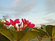 Die rote Blumenweinlese Lizenzfreie Stockfotografie