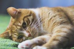 Die rote Katze betrachtet Sie Lizenzfreie Stockbilder