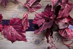 Die rote Kriechpflanzen-künstliche Anlage Lizenzfreies Stockbild