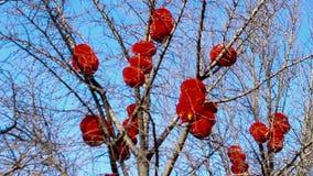 Die rote Laterne, die im Baum des Parks hängt,