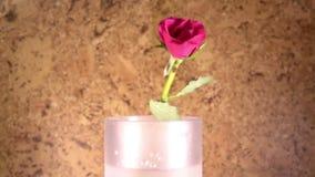 Die rote Rose fällt langsam, in einen Vase und aufzuprallen, Zeitlupe stock video footage
