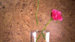 Die rote Rose fällt langsam, in einen Vase und aufzuprallen, Zeitlupe stock video