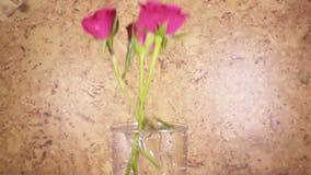 Die rote Rose fällt langsam, in einen Vase und aufzuprallen, Zeitlupe stock footage