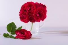 Die rote Rose ist ein weißer Hintergrund Lizenzfreie Stockbilder