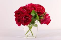 Die rote Rose ist ein weißer Hintergrund Lizenzfreies Stockbild
