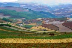 Die rote Terrasse von Yunnan, China Lizenzfreies Stockfoto