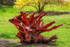 Die rote tote Baumwurzel Stockfoto