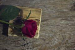 Die Rotrose, die auf einem schwarzen ackground lokalisiert wird, lieben Dunkelheit Lizenzfreies Stockbild