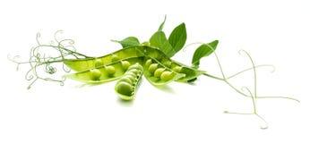 Die ruhige Lebensdauer der grünen Erbsen Stockfoto
