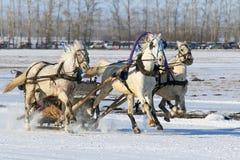 Die russischen drei von Pferden hetzt auf Schnee Lizenzfreies Stockbild