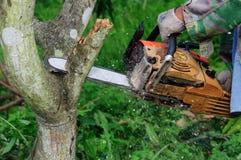 Die Säge, die das Holz schneidet Lizenzfreie Stockfotografie