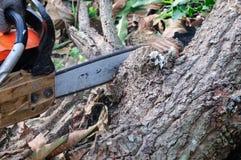Die Säge, die das Holz schneidet Stockfoto