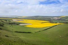 Die Süd- Abstiege, Ost-Sussex, England, Großbritannien lizenzfreies stockbild