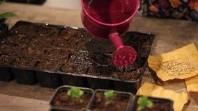 Die Samen oben wässern nah stock footage
