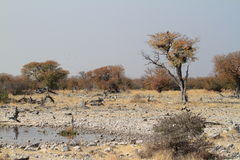 Die Savanne im Nationalpark Etosha in Namibia Lizenzfreies Stockbild